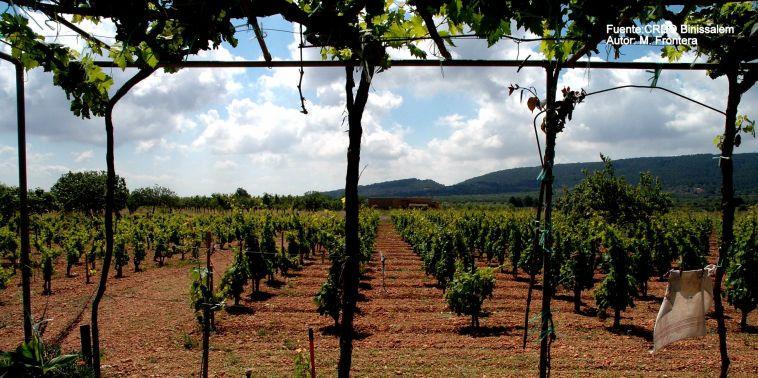 enoturismo en Mallorca